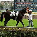 Photos: 5R新馬 フェイトフルウォー 捕獲