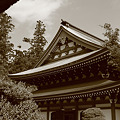 Photos: 円覚寺の新緑(モノクロ)
