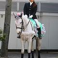 写真: 川崎競馬の誘導馬04月開催 桜Verその1-120409-03-large