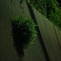 壁面の新緑