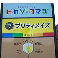 Photos: ぐりんぱ-Grinpa-:ピカソのタマゴ:プリティメイズ