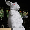 Photos: 招きウサギ