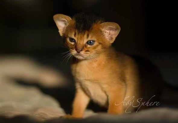 kitten1026_07
