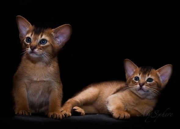 kitten1026_13