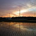 写真: 水田と鉄塔と夕暮れ