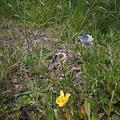 Photos: Butterfly05162011dp1-02