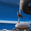 漁港のメーテルリンク