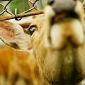 Photos: 鹿牧場