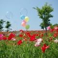 Photos: IMGP3917_0527