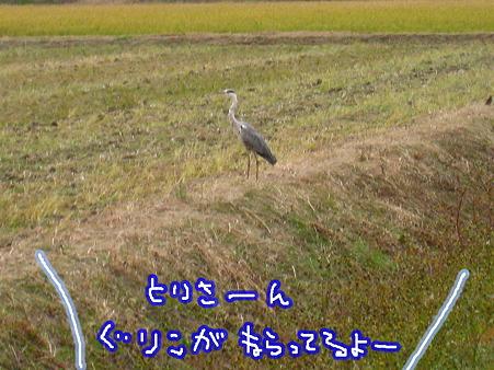 PIC00009