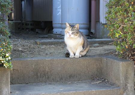 カズコさんちの猫