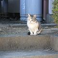 Photos: カズコさんちの猫