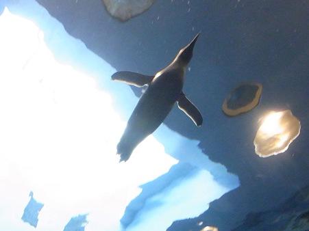 20110815 海響館 亜南極水槽13