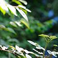 Photos: 20100704_145242