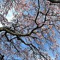 Photos: IMG_8646