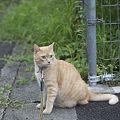 Photos: Caramel_8706