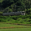 Photos: 菊川