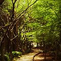 Photos: 森の中へ