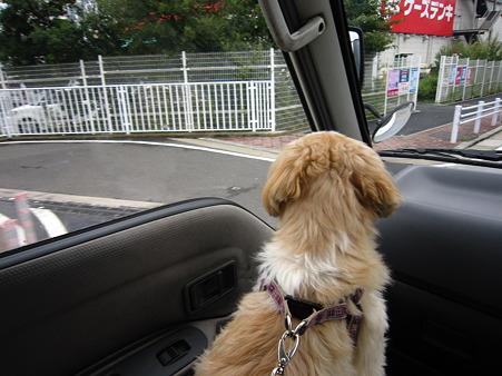 ドライブ大好き2