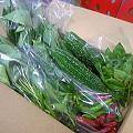 写真: 畑から採れたての野菜沢山頂きました!バジルの香が社内に広がっ てイ...