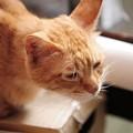 写真: 2009年7月5日のボクチン(5歳)