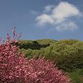桜から新緑へ