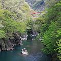 新緑の渡良瀬川