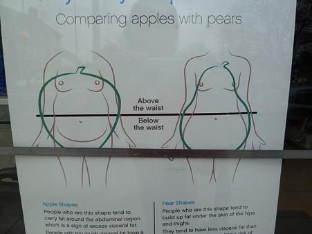 肥満タイプ