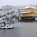 写真: 金閣寺12