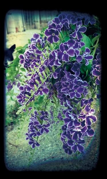 花の色が濃いなぁ~
