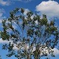 Tree in the Sky 9-4-10