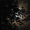 写真: Shine on, Harvest Moon