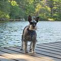 Mitzi on the Dock