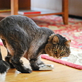 Photos: Pepper with Catnip