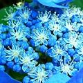 写真: 全部ブルー!