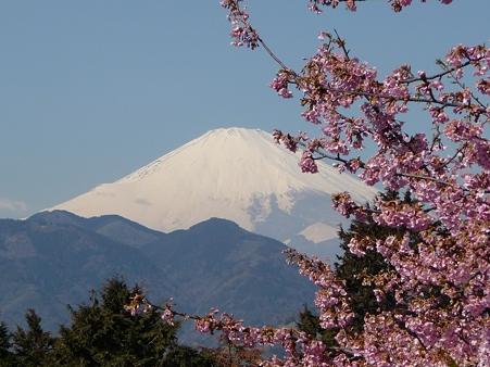110305-松田山 河津桜 (88)