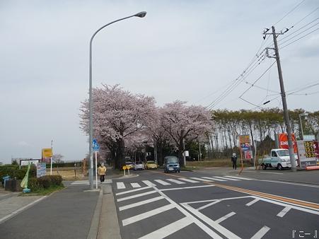 110411-海軍道路 (3)