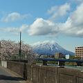 Photos: 明治橋と桜と岩手山