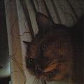 Photos: おはよ~♪今朝も猫々の「朝...