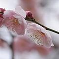 Photos: 春の予感。