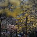 春かぜ吹く街3
