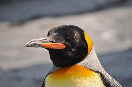 ペンギン5