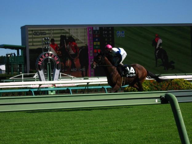 写真: ロードカイザー(返し馬ピンボケ)