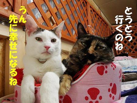 タカラ&ピカリ