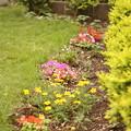 写真: 派手になる予定の庭