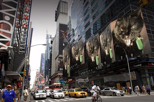 写真: 猛猫が街にあふれる