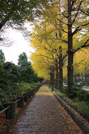 2010.11.22 みなとみらい 山下公園通り 銀杏