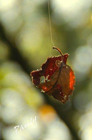 ゆらり~ 秋陽の三渓園 13