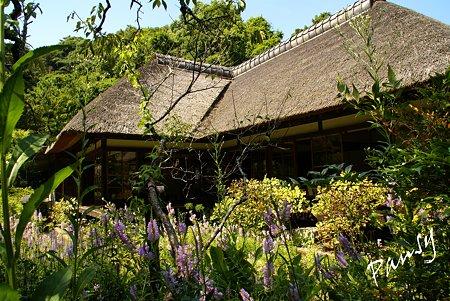 カクトラノオ咲く・・長月の浄智寺・・4