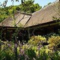 Photos: カクトラノオ咲く・・長月の浄智寺・・4